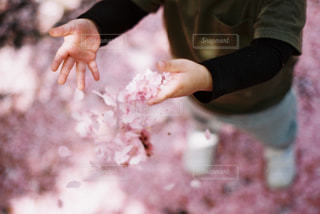 ピンク,pink,ピンクだらけ