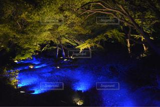 自然,夜,夜景,屋外,樹木,休日
