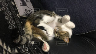 地面に横になっている猫の写真・画像素材[1001839]