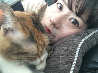 休日は猫と昼寝の写真・画像素材[1012243]