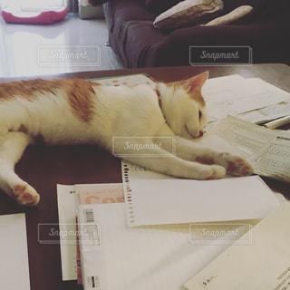 猫,勉強,愛猫,勉強疲れ,勉強の邪魔