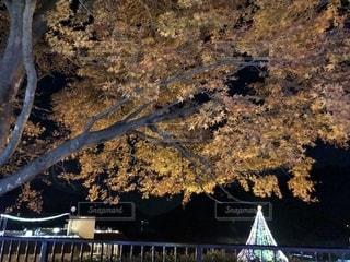 紅葉とツリーのコラボの写真・画像素材[1688529]