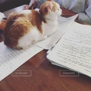 猫,屋内,勉強,自宅,テキスト,自習,自宅学習