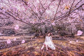 100歳の桜と20歳の女性の写真・画像素材[2062996]