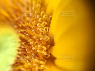 花,ひまわり,黄色,向日葵,ハート