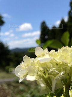 自然,風景,空,花,屋外,景色,樹木,紫陽花,梅雨,森林浴,無加工,草木