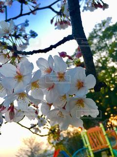 木の花の花瓶の写真・画像素材[1121978]