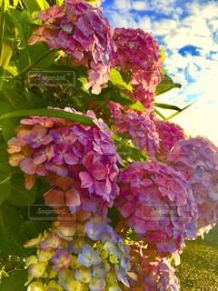 空,青空,紫陽花,梅雨