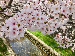 近くの花のアップの写真・画像素材[1852754]