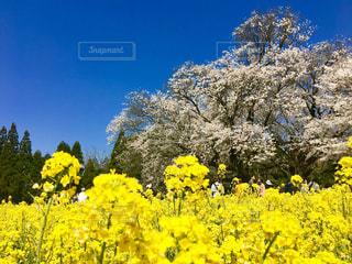 花の写真・画像素材[1969411]