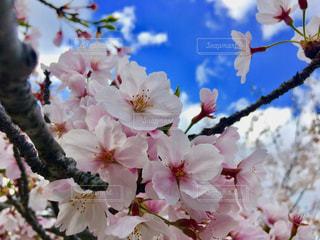 花の写真・画像素材[2012678]
