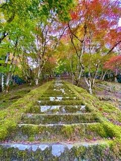 緑豊かな畑の真ん中にある木の写真・画像素材[2739959]