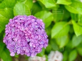 花のクローズアップの写真・画像素材[3392612]