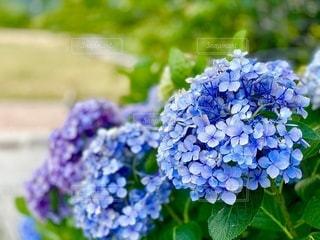 花のクローズアップの写真・画像素材[3392624]
