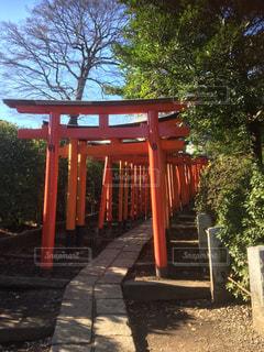 根津神社の写真・画像素材[1018263]