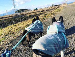 犬,散歩,休日,のんびり,冒険,探検,知らない場所