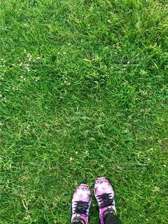 草の中に立っている小さな男の子の写真・画像素材[1003137]