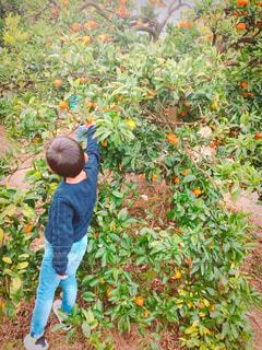 アウトドア,果物,みかん,休日,お出かけ,みかん狩り