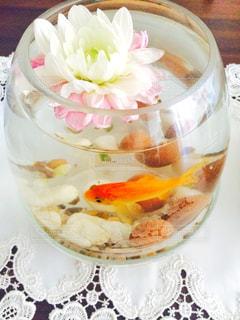 テーブル金魚の写真・画像素材[1004148]
