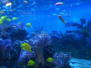 魚,水族館,休日