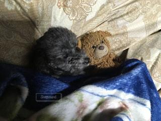 毛布の上に横になっている猫の写真・画像素材[1005787]