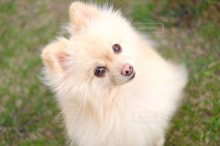 草の中に座っている犬の写真・画像素材[1005363]