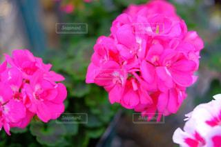 花の写真・画像素材[1798904]