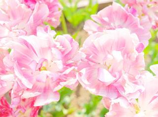 近くの花のアップの写真・画像素材[1798905]