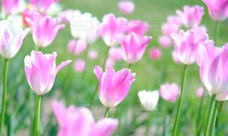 近くの花のアップの写真・画像素材[1798914]