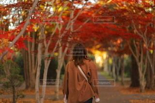秋のお散歩の写真・画像素材[2667347]