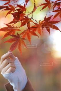 紅葉狩りの写真・画像素材[2667363]