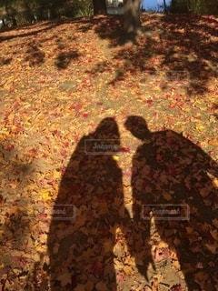 紅葉の絨毯の写真・画像素材[2667401]