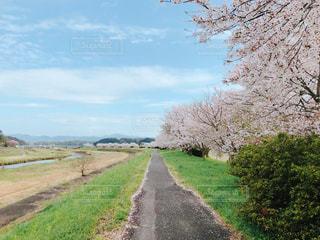 未舗装の道路側の木のパスの写真・画像素材[1111754]
