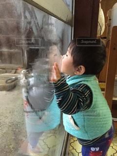 結露を舐める少年の写真・画像素材[1159055]