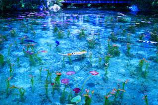 水のカラフルな水泳のグループの写真・画像素材[1013958]