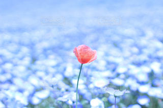 近くの花のアップ - No.1013963