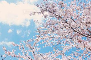 春うららの写真・画像素材[1105520]