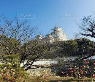 観光,快晴,姫路城,遠視,白く光る