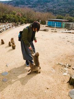 自然,可愛い,小豆島,賢い,お猿