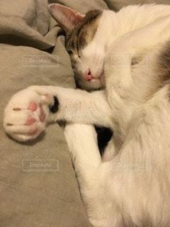 猫の写真・画像素材[33796]