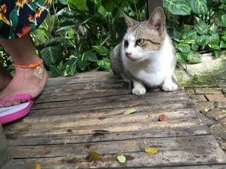 猫の写真・画像素材[56647]
