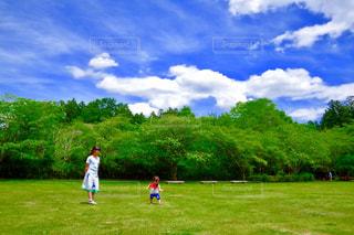 緑,青空,散歩,景色,新緑,芝の上で