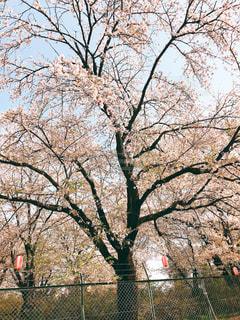公園の木の写真・画像素材[1108282]