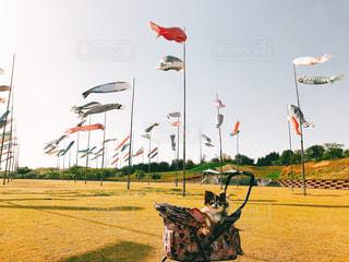 フィールドに凧の飛行の人々 のグループの写真・画像素材[1126253]
