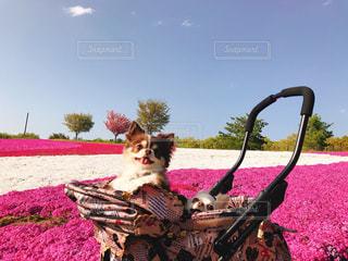 ピンクの毛布の上に座って人の写真・画像素材[1126316]