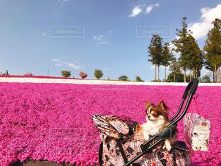 草の中に座っている犬の写真・画像素材[1126981]