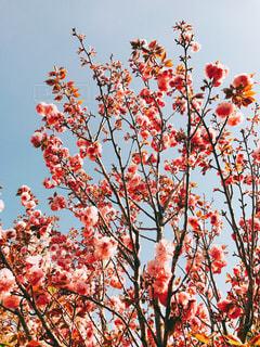 木の上に座って鳥の群れの写真・画像素材[1127108]