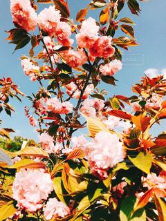 近くの花のアップの写真・画像素材[1127665]