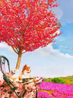 木の赤い花の写真・画像素材[1185421]