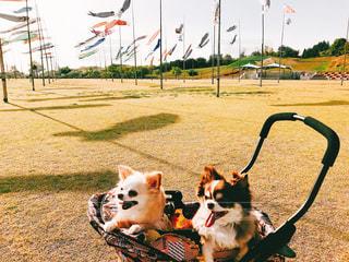 草の中に座っている犬の写真・画像素材[1185489]